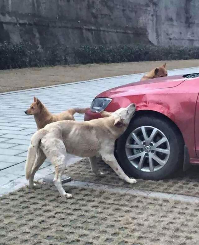 Köpeklerin Korkunç İntikamı galerisi resim 1