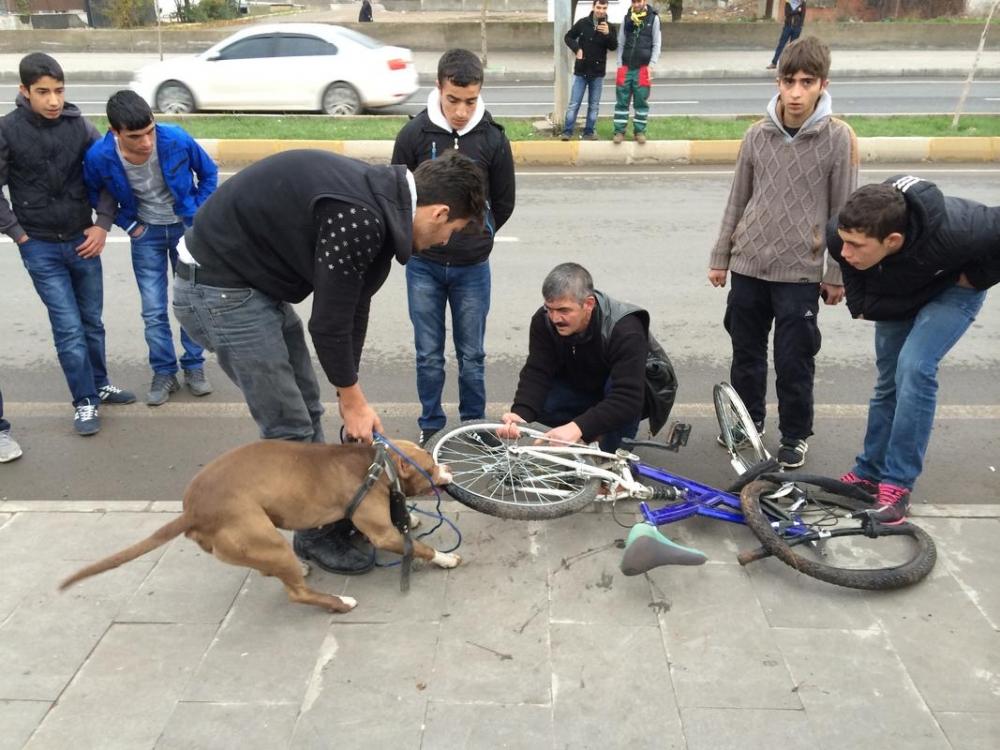 Diyarbakır'da Bisiklete Saldıran Pitbull Cinsi Köpek galerisi resim 1