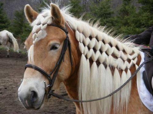 En Güzel Örülmüş At Yeleleri ve Kuyrukları galerisi resim 1