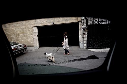 Sokak Köpeklerini Vurmaları Emredilmişti, Ama Onlar Tersini Yaptı galerisi resim 1