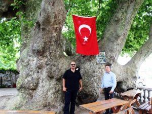 Osmanlı İmparatorluğu'ndan Daha Yaşlı Çınar Ağacı