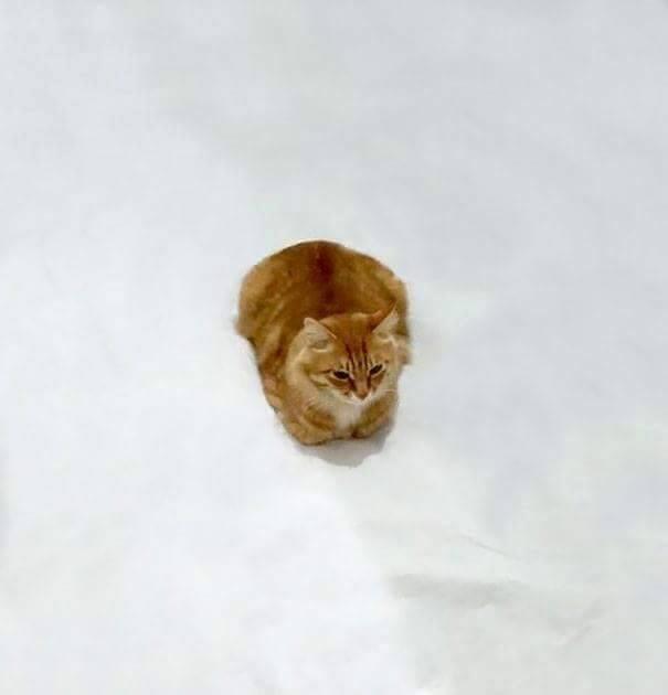 Çizimci Kedisiyle Eğlenceli Çizimler Yaparsa galerisi resim 1