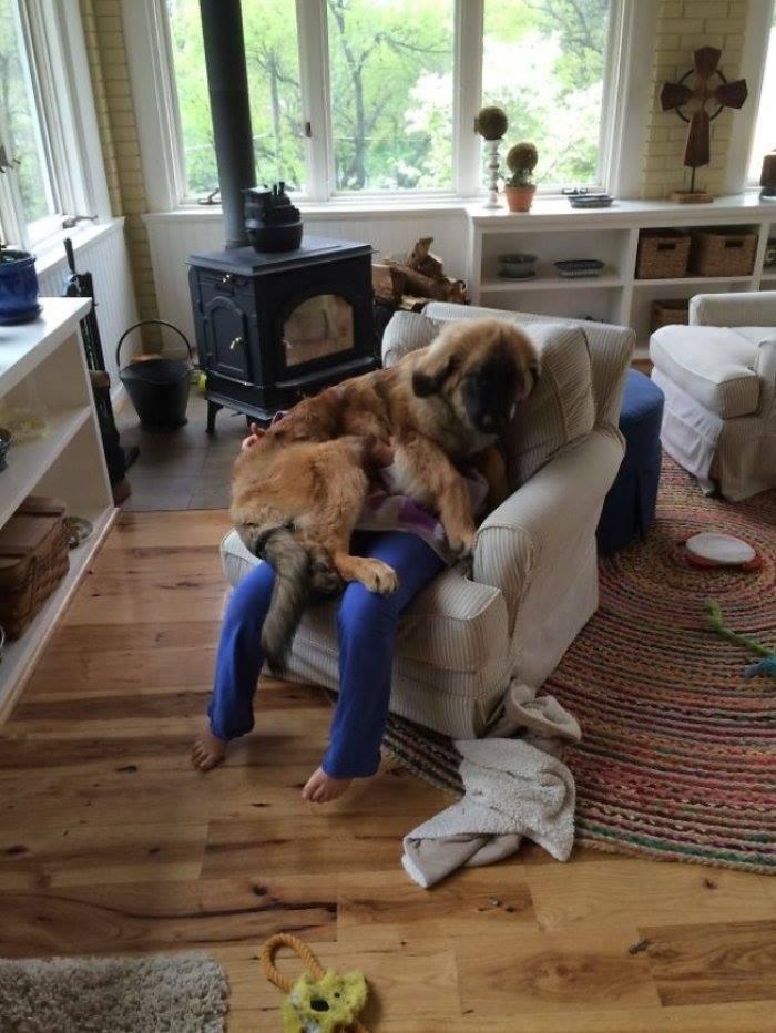 Kişisel Alan Özgürlüğüne Saygısı Olmayan Köpekler galerisi resim 1