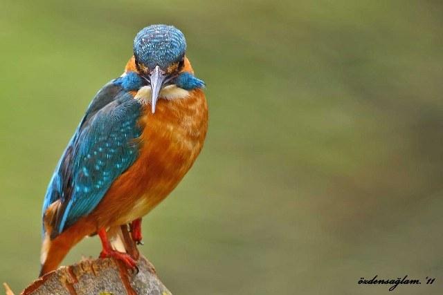 Kızılırmak Kuş Cennetinden Harika Kareler galerisi resim 1
