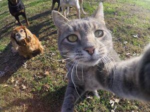 Köpeklerle Selfie Çeken Cesur Kedi
