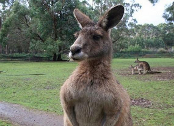 Hayvanlar Selfie Çekerse galerisi resim 1