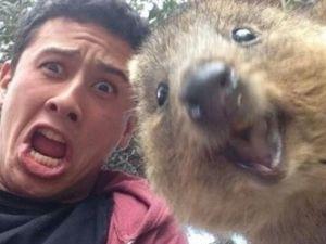 Hayvanlar Selfie Çekerse
