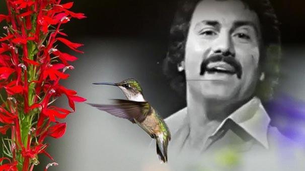 Ünlü Şarkıcı Aydın Tansel Hayatını Kaybetti galerisi resim 1