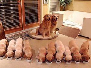 Sevimli Yavrular ve Gururlu Anneleri