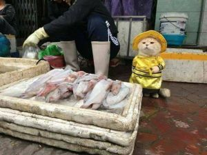 Vietnam'da Bir Balık Pazarında Çekilen Fotoğraf Sosyal Medyada Vira