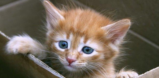Hayali Kedi Satışına 7 Yıl Hapis İstendi!..