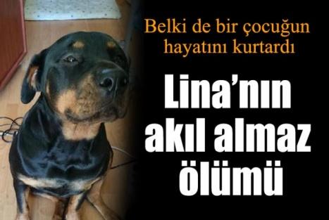 Lina'nın Ölümü Belki Bir Çocuğun Hayatını Kurtardı !