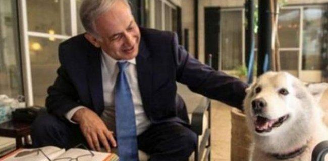 Netanyahu'nun Köpeği Konuklarını Isırdı