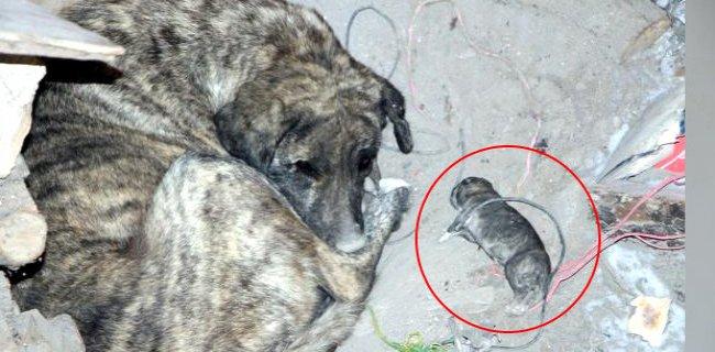 Anne Köpek İnsanlığa Ders Verdi