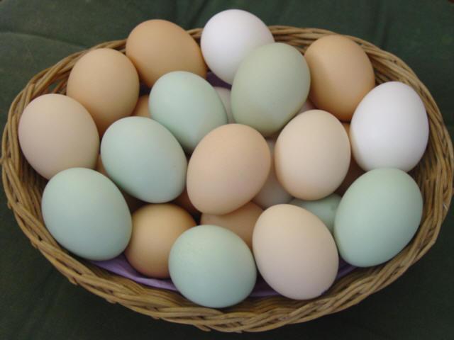 Yumurtanın da Artık Standartları Değişiyor!