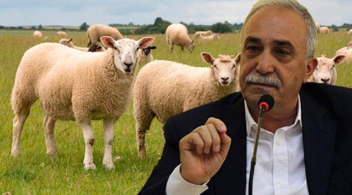 Bakan Fakıbaba: Herkese Bedava 300 Koyun Verilmeyecek!