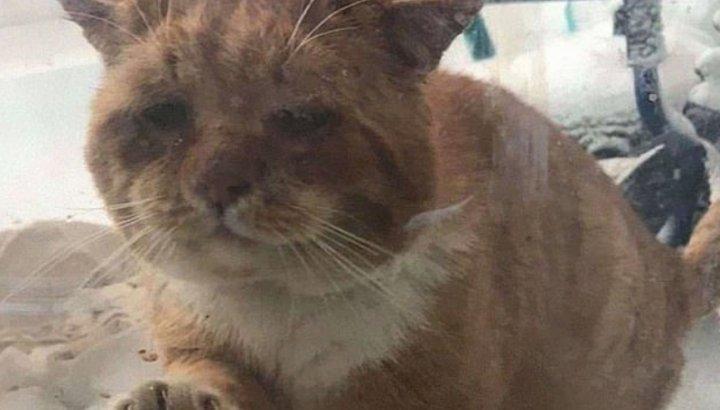 Kanada'da soğuktan donmak üzere olan kedi, camı tırmalayarak yardım istedi