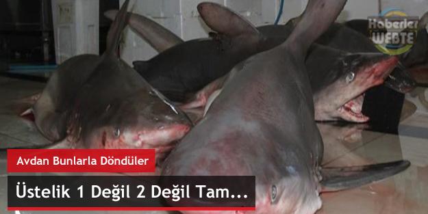 Akdenizde Balıkçılar Tam 7 Tane Köpek Balığı Yakaladı
