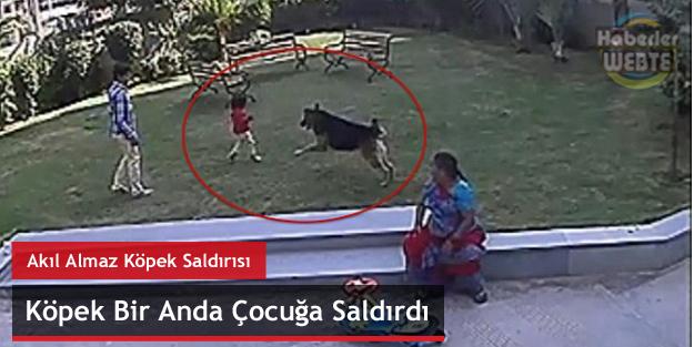 Akıl Almaz Köpek Saldırısı (Bir Anda Çocuğa Saldırdı)