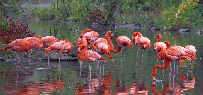 Bursa'da Flamingo Vahşeti!