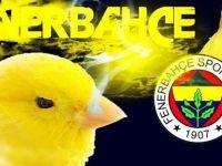 TFF: Fenerbahçe - Mersin İdmanyurdu Maçını Erteledi