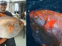 Bu Balığın Öyle Bir Özelliği Var Ki