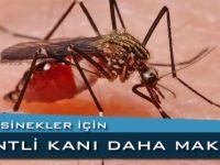 Sivrisinek'ler İçin Kentli Kan'ı Daha Makbul