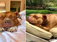 8 Sene Boyunca Karanlık Taş Bodrumda Zincirlenerek Yaşayan Köpeğin Dönüşüm Hikayesi