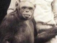 100 Yıl Önce Denenmiş Korkunç Deney: Şempanze ve İnsanın Döllenmesi İle Oluşturulan Yaratık Humanzee!