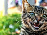 Kedi tırmığına 2.5 yıl hapis cezası
