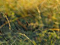 Yolun Ortasına Örümcekler Nasıl Örümcek Ağı Örerler ?