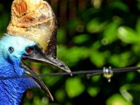 'Dünyanın en tehlikeli kuşu' sahibini öldürdü
