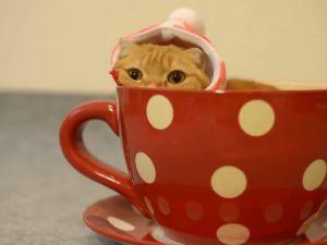 Bir Fincanlık Kedi