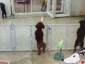 Heyecanlı Köpek Sahibini Görürse