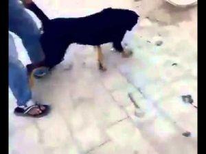 7 Katlı Binadan Köpeği Atan Vicdansız