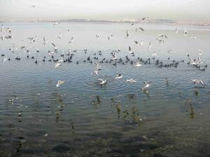 Sahili Basan Balıkçıllar