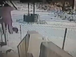 Kadına Saldıran Kedi