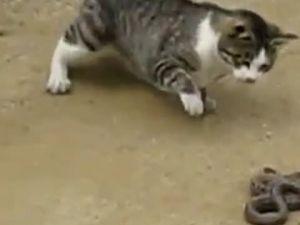 Kedi Yılanı Bir Çırpıda Haklıyor